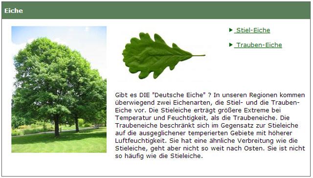 Baumkunde – Informationen zu Bäumen und Sträuchern